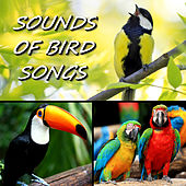 Sounds of Bird Songs by Sounds Of Bird Songs