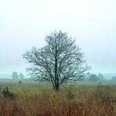 Gallows Tree by Blu Acid