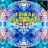 Play & Download Tribal Celebrate by Various Artists | Napster