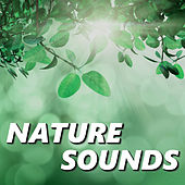 Nature Sounds by Relaxing Sounds of Nature