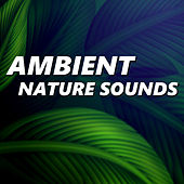 Play & Download Ambient Nature Sounds by Ambient Nature Sounds | Napster