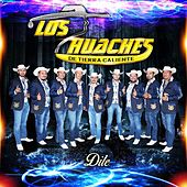 Play & Download Dile by Los Huaches De Tierra Caliente | Napster