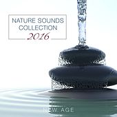 Play & Download Nature Sounds Collection 2016 by Various Artists | Napster
