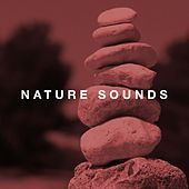 Nature Sounds - Relaxing Music, White Noise, Rain Sounds and Ocean Waves by Various Artists