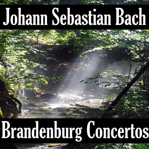 Play & Download Johann Sebastian Bach: Brandenburg Concerto's by Johann Sebastian Bach | Napster