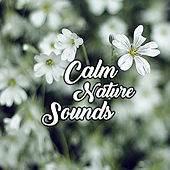Play & Download Calm Nature Sounds – Peaceful Sounds of Birds and Ocean Waves, Relaxation Music, Reiki, New Age by New Age | Napster
