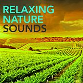 Play & Download Relaxing Nature Sounds -  Waterfall Constant Roar of a Mountain Waterfall to Reduce Stress & Rest, Nature Sounds Relaxing Minds for Relaxation Time by Sounds of Nature Relaxation | Napster
