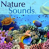 Play & Download Nature Sounds Long Waterfall -  River Stream, Gentle Rain Sounds and Birds Singing in the Morning, Natural Sleep Aid Relaxing Music Sleep, Water Sound, Natural Sounds and Relaxing Sounds of Nature by Sounds of Nature Relaxation | Napster
