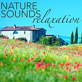 Play & Download Nature Sound for Relaxation - Running Water Stream, Relaxing Ocean Waves & Birds Sound Therapy for Placebo Effect & Deep Sleep by Sounds of Nature Relaxation | Napster
