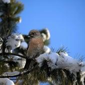 Winter Bird by Ric Eittreim