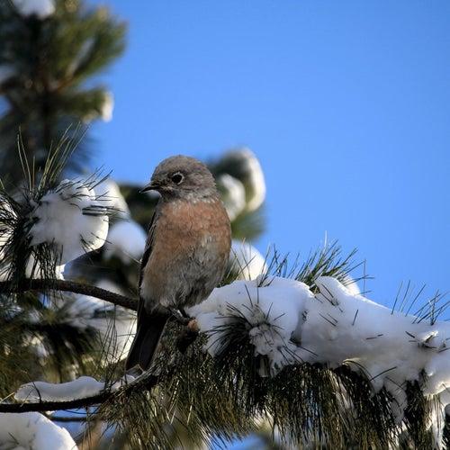 Play & Download Winter Bird by Ric Eittreim | Napster