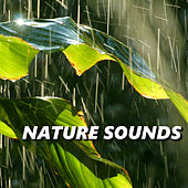 Nature Sounds by Nature Sounds XLE Library
