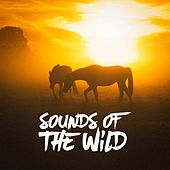 Play & Download Sounds of the Wild by Various Artists | Napster