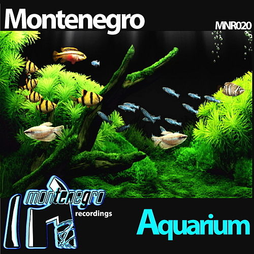 Play & Download Aquarium by Monte Negro | Napster