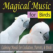Play & Download Magical Music for Birds: Calming Moods for Cockatoos, Parrots, & Birds by Steven Current | Napster