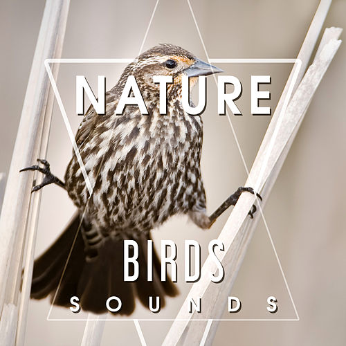 Play & Download Nature Birds Sounds – Calming Sounds, Singing Birds, Sounds of Forest, Rest a Bit, Free Time by Echoes of Nature | Napster