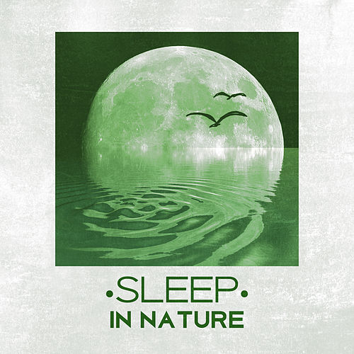 Sleep in Nature - Peaceful Sounds of Nature for Sleep, Easily Fall Asleep, Relax, Restful Sleep by Sounds Of Nature
