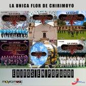 Exitos en Popurri by Banda Flor de Chirimoyo