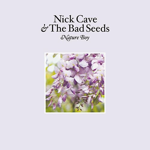 Nature Boy by Nick Cave
