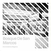 Play & Download Bosque de San Marcos by Dromedarios Mágicos | Napster