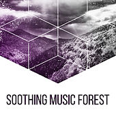 Soothing Music Forest – Nature Sounds for Relaxation, Classical Guitar, Birds Singing, Soft Melodies, Pure Mind, Sounds of Forest, Deep Sleep by Sounds Of Nature