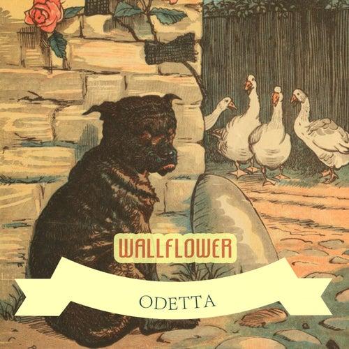 Wallflower von Odetta
