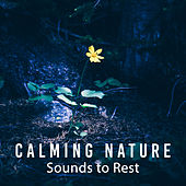 Play & Download Calming Nature Sounds to Rest – Chilled Moments, Beautiful Nature Music, Sounds to Rest & Relax, New Age Healing Music by Best Relaxation Music | Napster