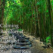 Play & Download Light and Gentle Rainforest Rain by Calming Rainforest Sounds | Napster