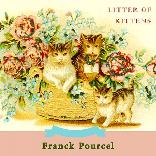 Litter Of Kittens by Franck Pourcel