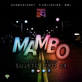 Play & Download Mambo by Sujeto Oro24 | Napster