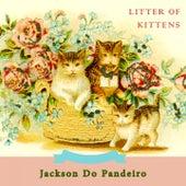 Litter Of Kittens de Jackson Do Pandeiro