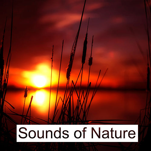 Play & Download Sounds of Nature – Relaxing Waves for Pure Mind, Deep Sleep, Sea Sounds by Soothing Sounds | Napster