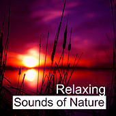 Relaxing Sounds of Nature – Rest & Relax, New Age Music, Soft & Soothing Music, Sounds to Keep Calm by Relaxation Meditation Yoga Music