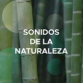 Play & Download Sonidos de la Naturaleza: Lluvia, Viento, Tormenta y Olas del Mar (Música Relajante Instrumental New Age) by Various Artists | Napster