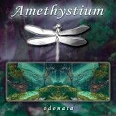 Odonata by Amethystium
