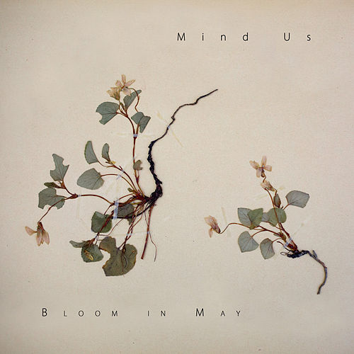 Play & Download Bloom in May by Mind Us | Napster