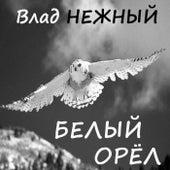 Play & Download White Eagle by Vlad Nezhnyy | Napster