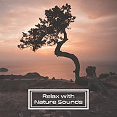 Play & Download Relax with Nature Sounds – Music for Relaxation, Deep Sleep, Relaxing Waves, Soothing Rain, Birds Sounds, Ambient Music, Pure Mind by Best Relaxation Music | Napster
