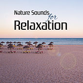 Play & Download Nature Sounds for Relaxation – Best Chillout Music, Sounds of Sea, Drinks on the Beach, Deep Chill, Summertime by Cafe Ibiza | Napster