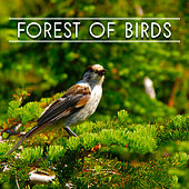 Forest of Birds – Nature Sounds for Relaxation, Meditation Music, Singing Birds, Soft Music, Pure Mind, Music for Rest, Nature Sounds by Bird Sounds