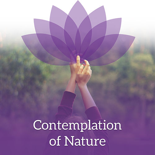 Play & Download Contemplation of Nature – Pure Mind, Nature Sounds for Relaxation, Meditation Music, Stress Relief, Reiki Music, Relaxing Waves, Deep Focus by Buddha Sounds | Napster
