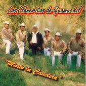 Murio la Canelera by Los Llaneritos De Guamuchil