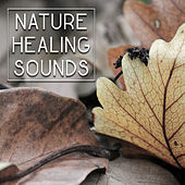 Nature Healing Sounds – Soft Music to Calm Down, Waves of Calmness, Peaceful Sounds, Mind Control by Sounds of Nature Relaxation