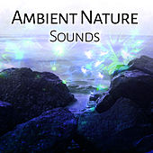 Ambient Nature Sounds – Calm Your Mind, Relaxing Melodies, Stress Free, Inner Harmony by Echoes of Nature