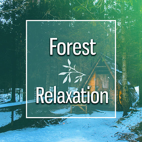 Play & Download Forest Relaxation – Music to Calm Down, Stress Relief, Nature Sounds to Focus Mind, New Age by Relaxing Sounds of Nature | Napster