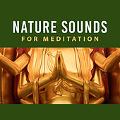 Nature Sounds for Meditation – Yoga Training, Spiritual Healing, Meditation Music, Focus, Peaceful Mind by Asian Traditional Music