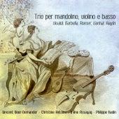Play & Download Trio per mandolino, violino e Basso by Various Artists | Napster