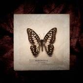 Mariposas de Lichis