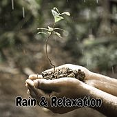 Play & Download Rain & Relaxation by Rain Sounds (2) | Napster