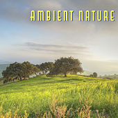 Ambient Nature – Organic Sounds for Deep Relief, Relax, Peaceful Music for Relaxation, Stress Relief, Ocean Dreams, Relaxing Waves, Pure Mind by Sounds of Nature Relaxation